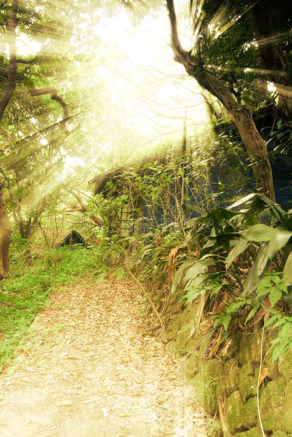 Sun light ruin. Sun light through trees of forest in ruins royalty free stock image