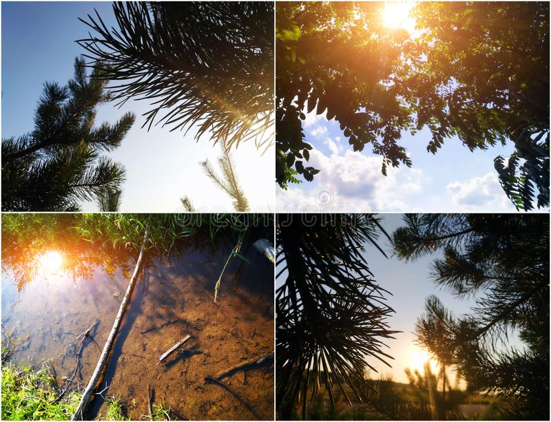 Sun light summer collage with sunrise and pine trees. Nature background with sun light. stock photo
