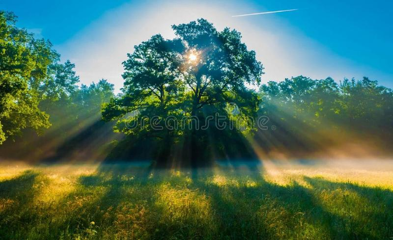 Sun light throw the tree in the morning. royalty free stock image