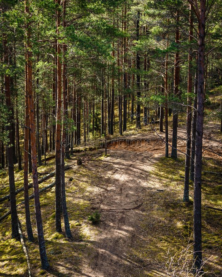 Sun-lit forest with forest path. View from above to the pine forest, sun-lit forest with forest path; Beautiful view from the top to the amazingly green forest stock photography