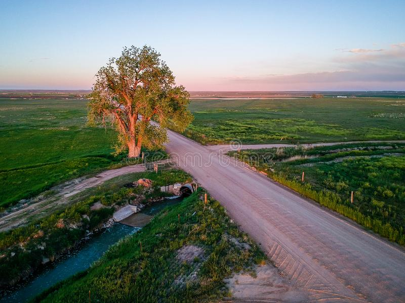 Sun lit tree. By dirt track in Colorado, USA royalty free stock image