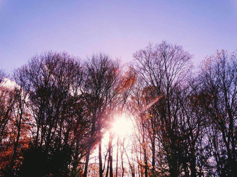 Sun Lite photo libre de droits