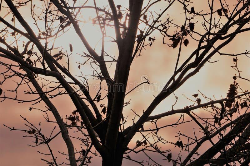 Sun mira a escondidas a través de las nubes gruesas detrás de árbol desnudo fotos de archivo