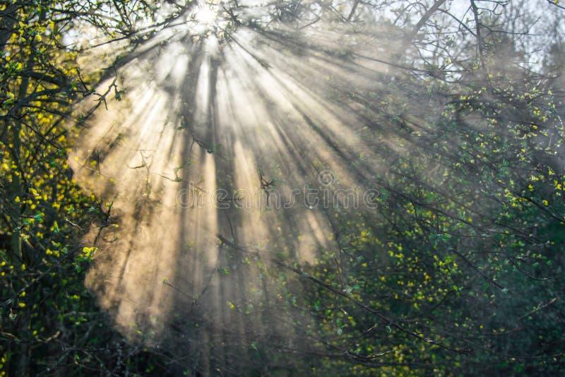 sun and mist, beautiful sunrise royalty free stock photography