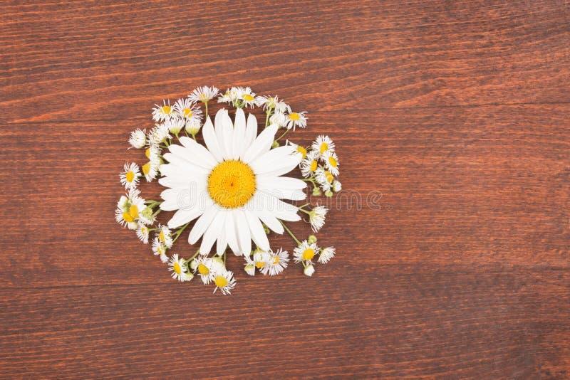 Download Sun Mit Strahlen Von Der Kamille Konzept Stockfoto - Bild von floral, frech: 96925754