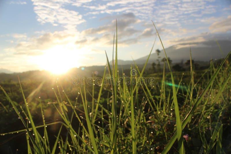 Sun morgens stockfotografie