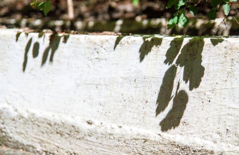 Sun moulant l'ombre d'un arbre sur l'asphalte photo stock
