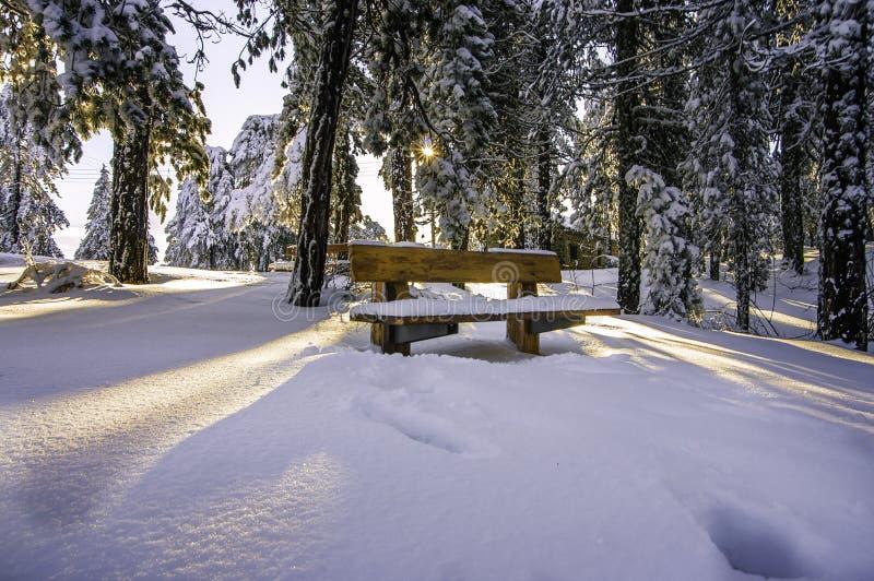 Sun na neve imagens de stock