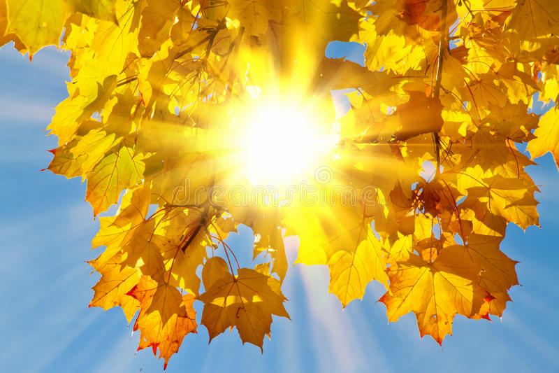 Sun nas folhas do autmn fotos de stock royalty free
