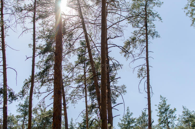 The Sun nella foresta fotografia stock