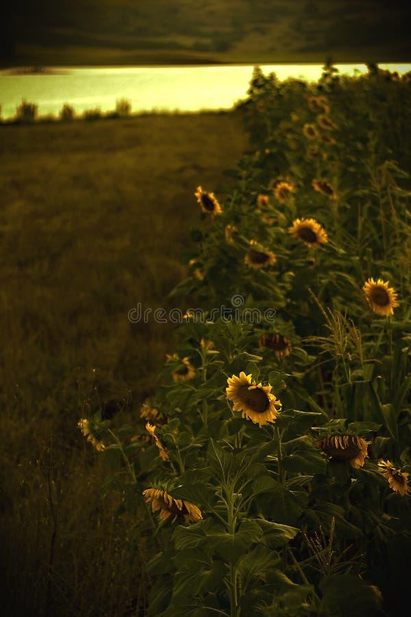 Sun no ar fotografia de stock