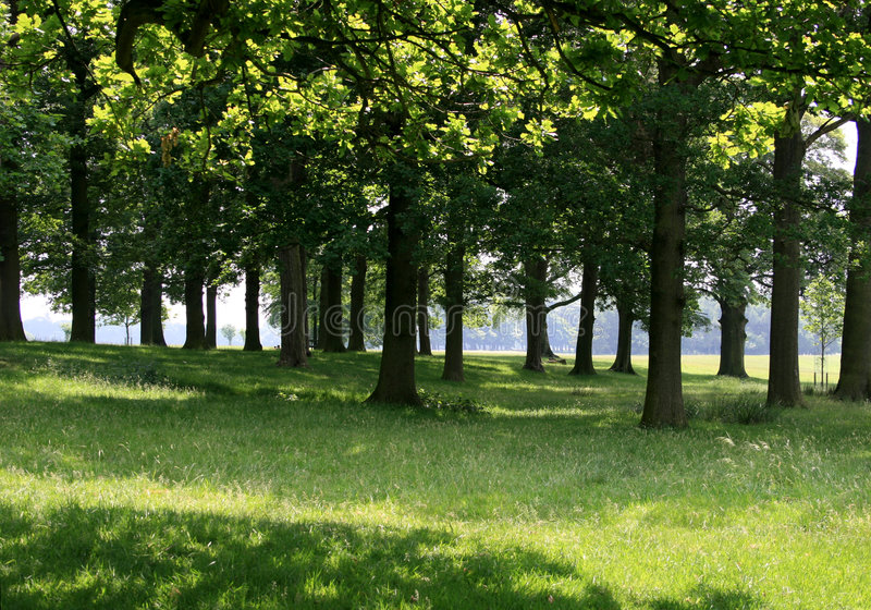 Download Sun through the oak trees stock image. Image of woodland - 2696355
