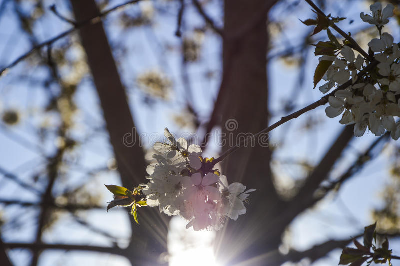 Sun och blommor royaltyfria bilder