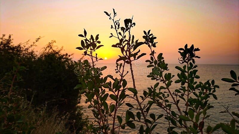 Sun och tree royaltyfria bilder