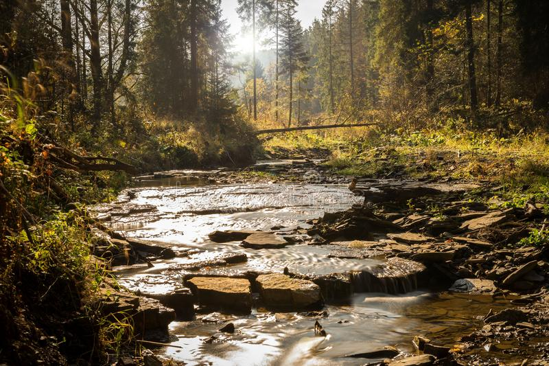 Sun over the forest stock photography