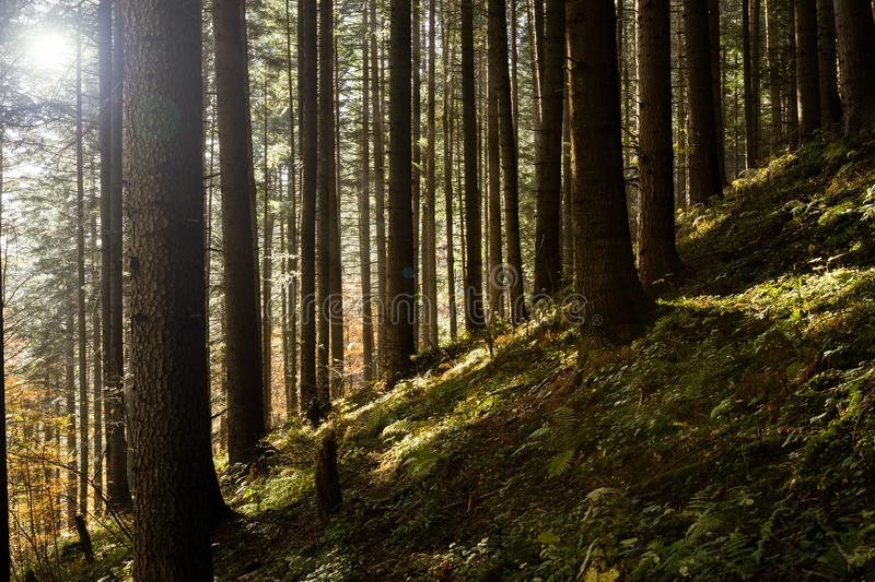 Sun over the forest royalty free stock photo