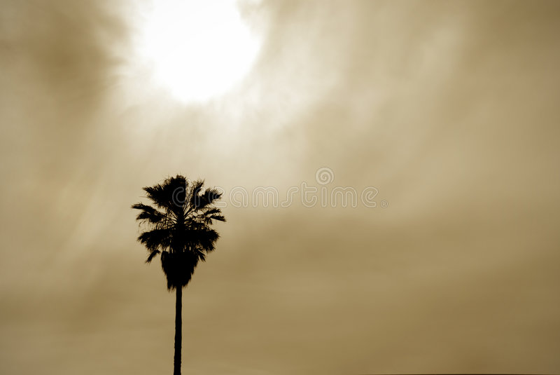 Sun and Palm Background stock photos