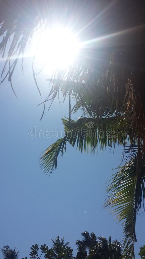 Sun and palm tree royalty free stock photography