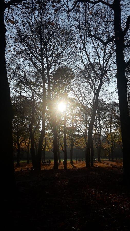 Sun par des arbres images stock