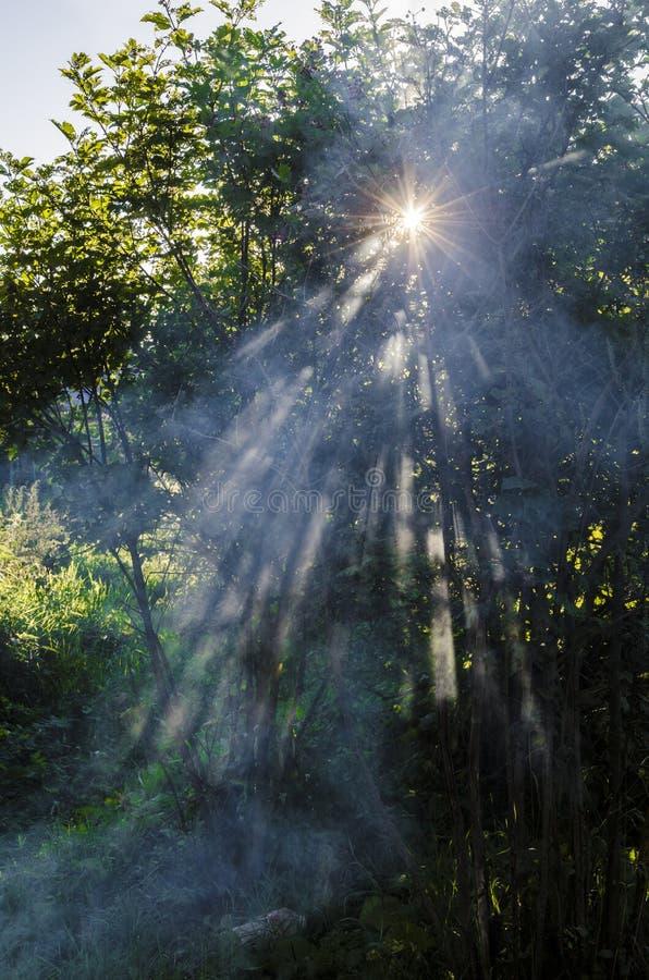 Sun par l'arbre image stock