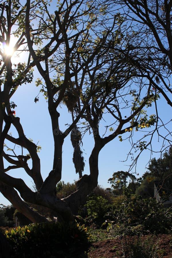 Sun par un arbre photo stock