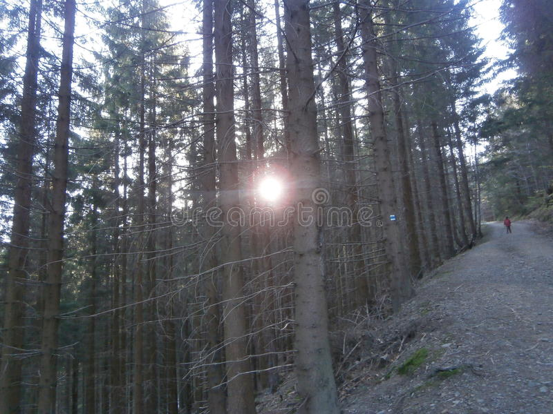 Sun para árvores imagens de stock royalty free