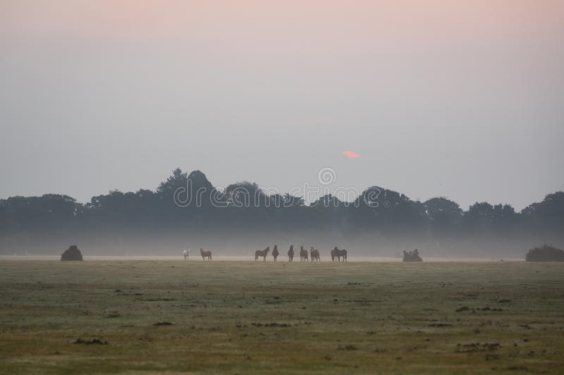 Sun peaking through the clouds in the misty morning ponies feeding royalty free stock image