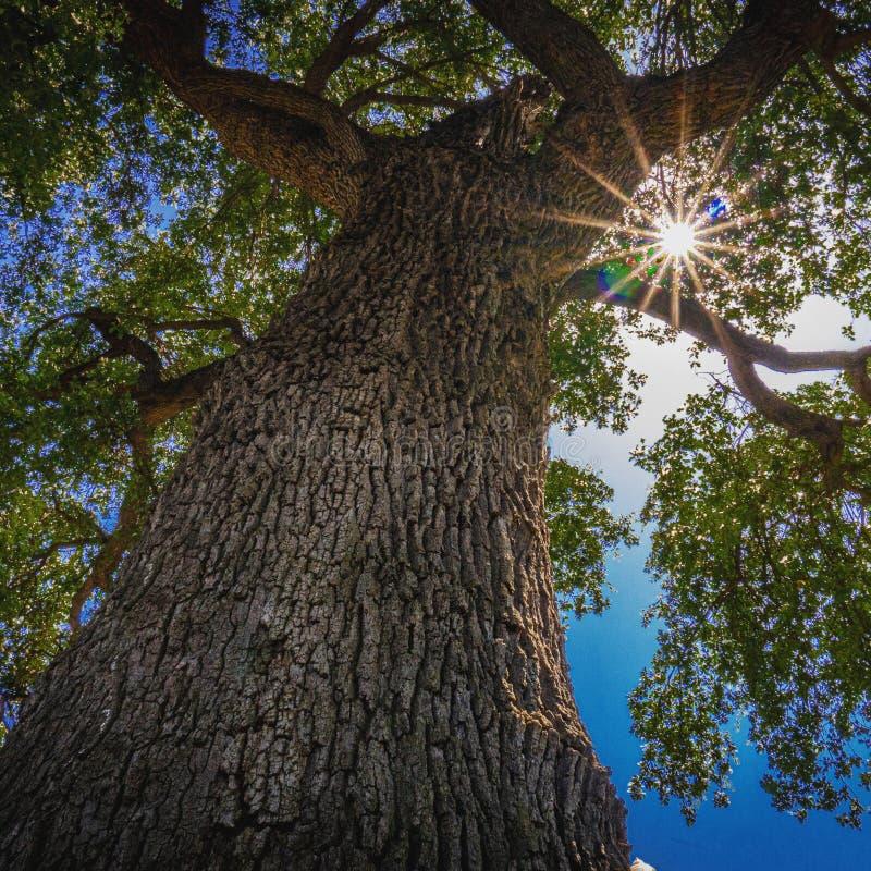 Sun peaking through leaves of tree stock image