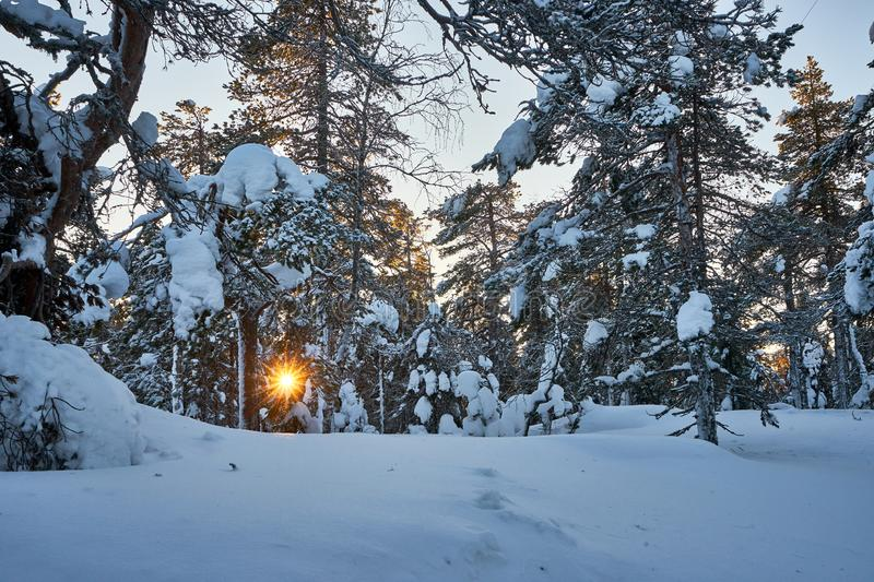 Sun peeking through snowy forest in mouuunntains royalty free stock photography