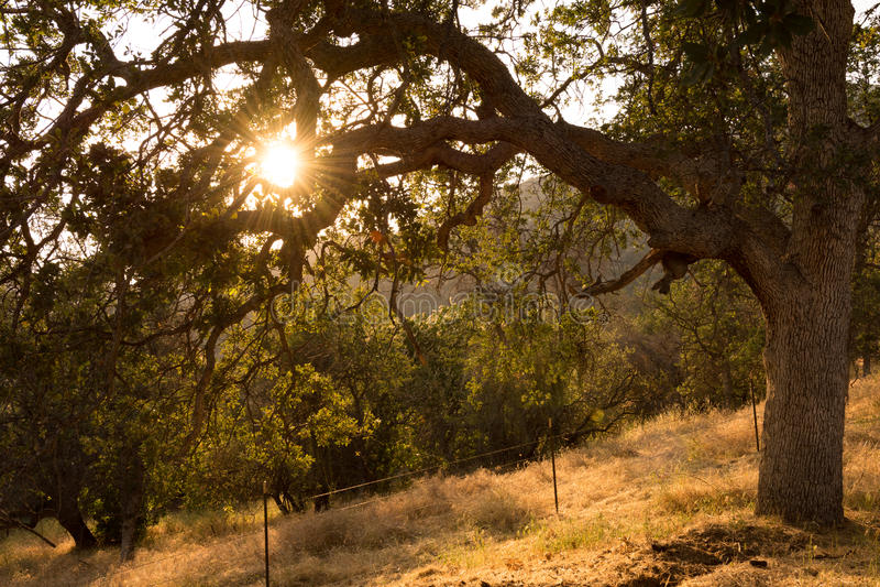 Sun peeking through tree royalty free stock image
