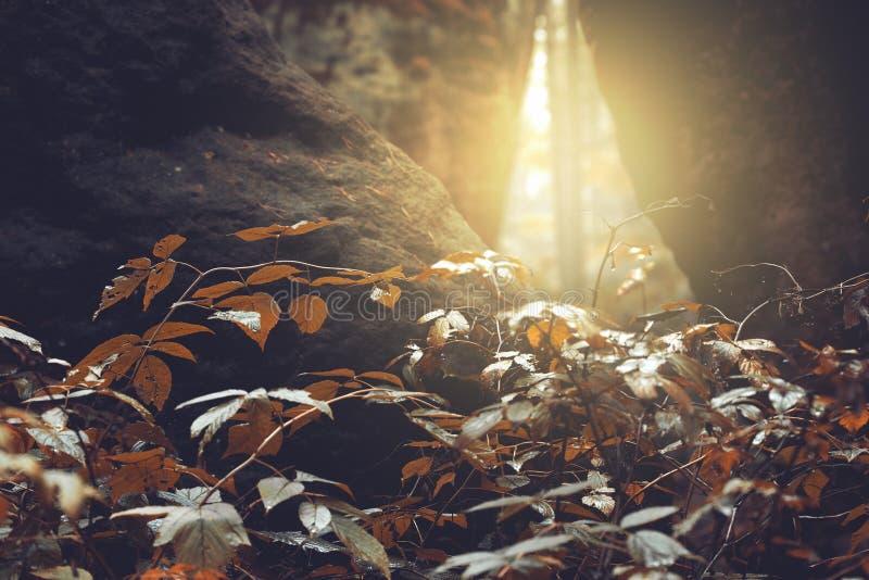 Sun piercing through the cracks of rocks, autumn royalty free stock photos