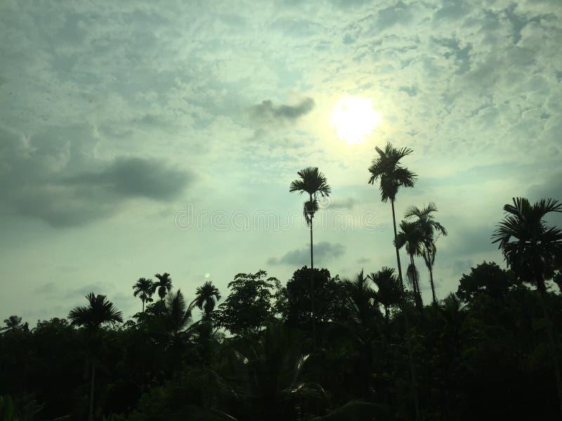Sun a placé avec des arbres de noix de bétel images libres de droits
