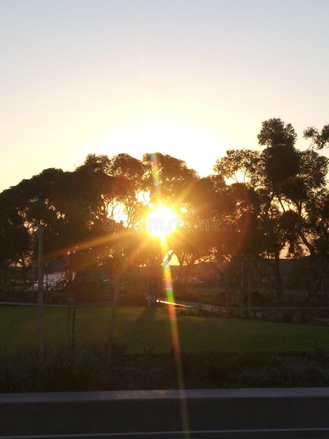 Sun przez drzew fotografia stock