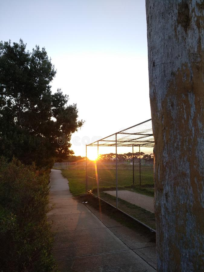 Sun przez drzew zdjęcia stock