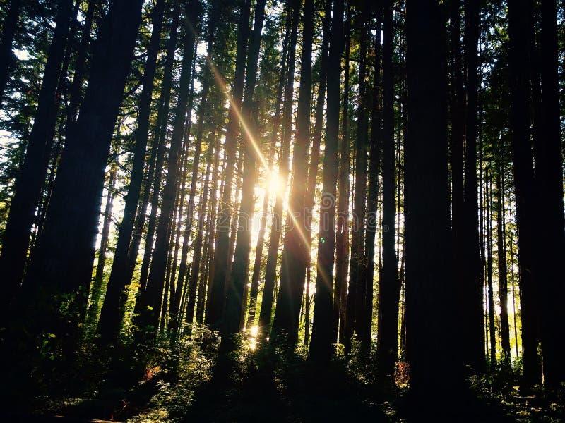 Sun przez drzew zdjęcie royalty free