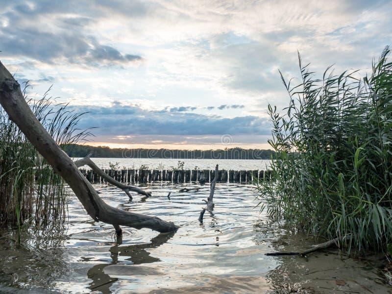 Sun que ajusta-se sobre um lago nas madeiras, no verão fotos de stock