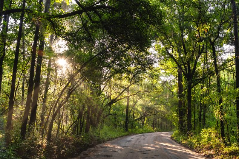 Sun que brilha através da floresta em South Carolina imagens de stock royalty free