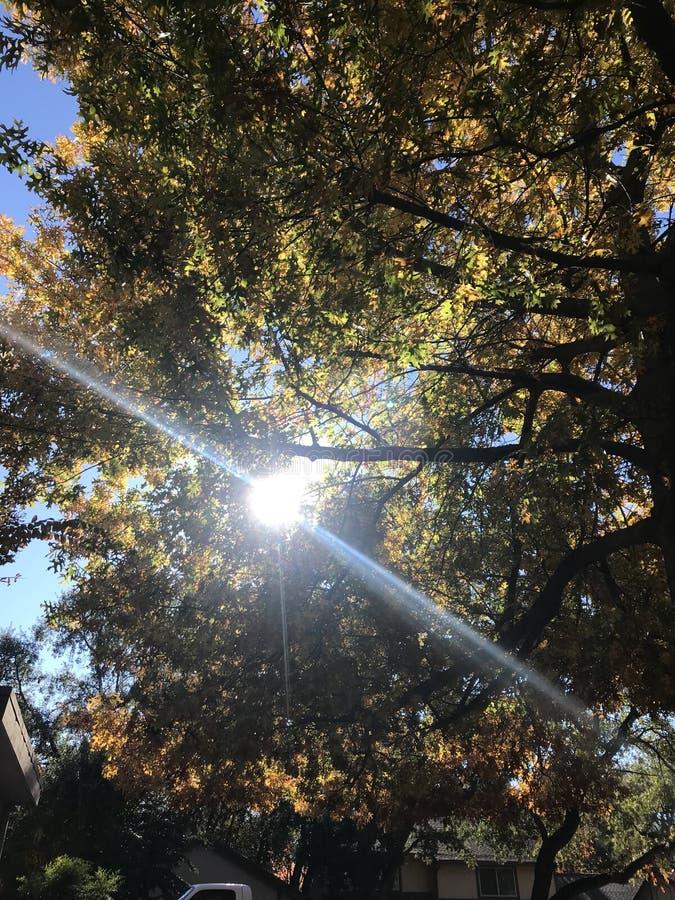 Sun que brilha através das árvores da queda foto de stock