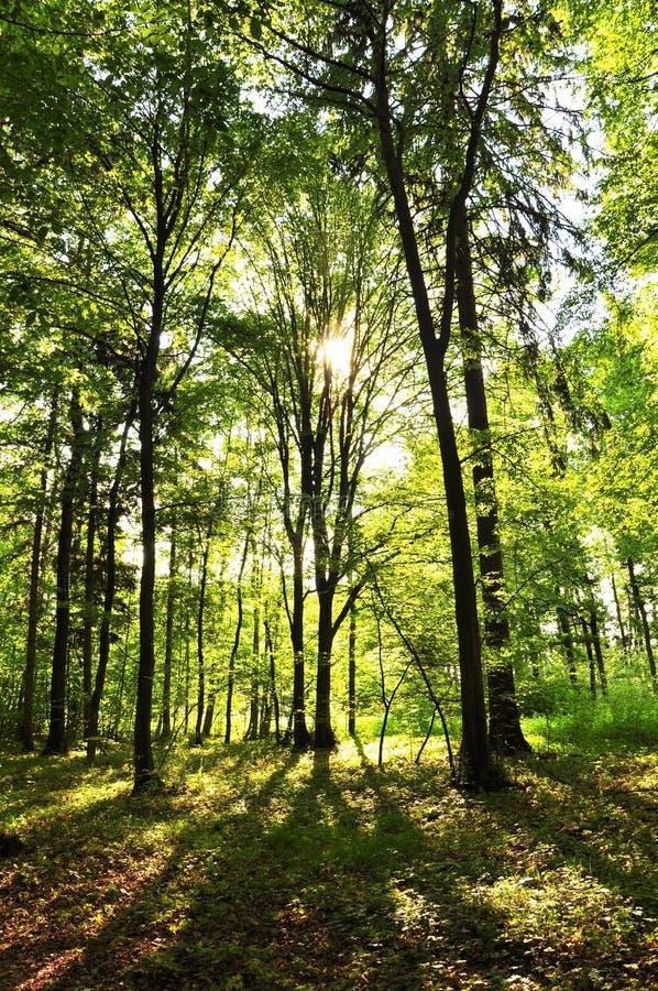 Download Floresta verde bonita imagem de stock. Imagem de enrolamento - 29842837