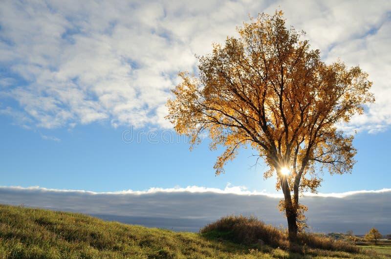 The Sun que brilha através de uma árvore na queda fotografia de stock