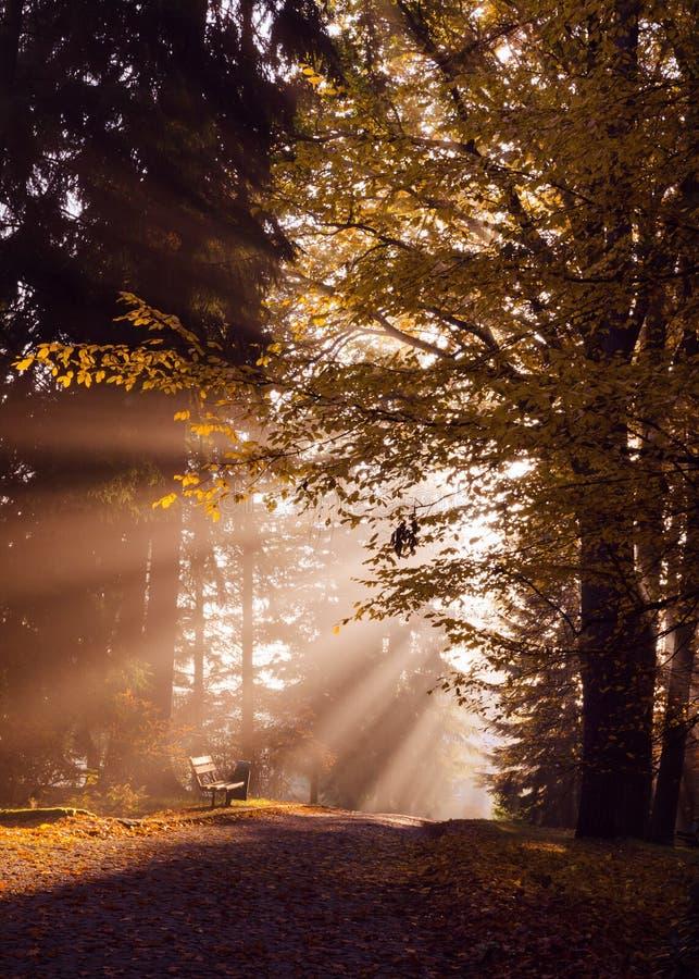 Sun que brilha no parque da manhã do outono imagens de stock
