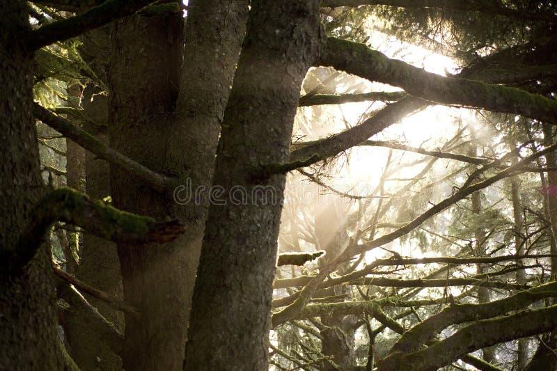 Sun que brilla a través de árboles fotos de archivo libres de regalías