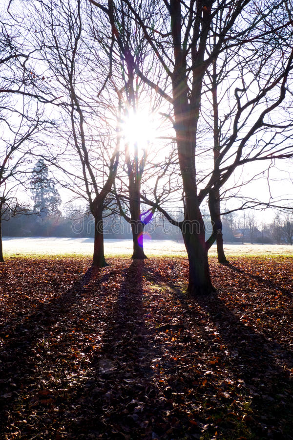 Sun que flui através das árvores, uckfield, Sussex do leste imagem de stock