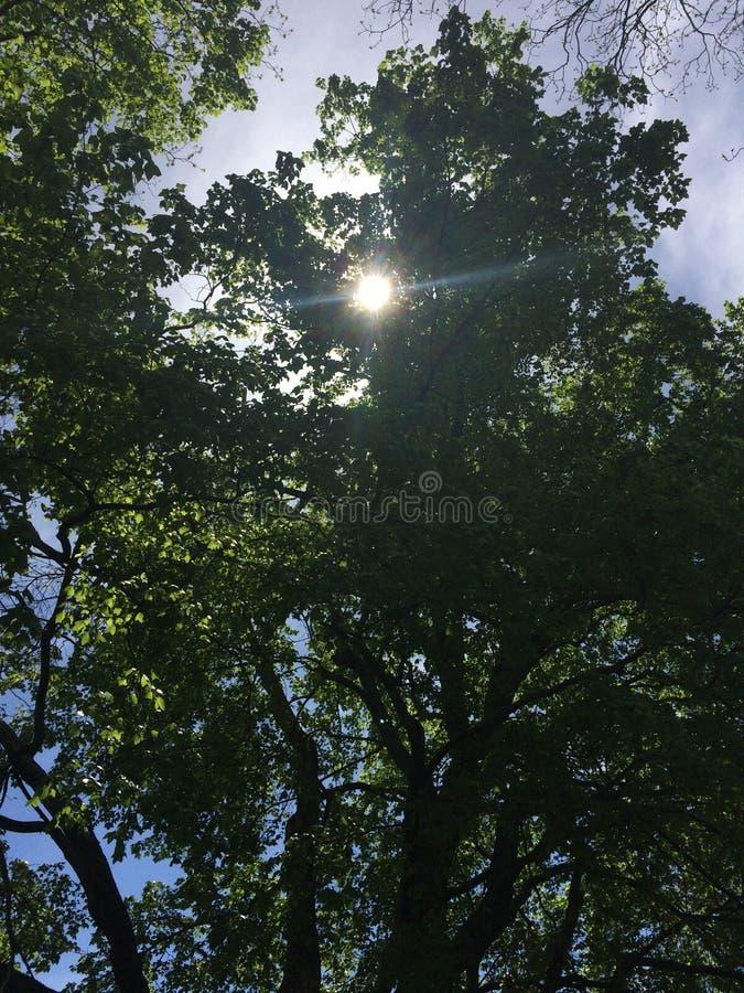 Sun que repica através das árvores fotografia de stock