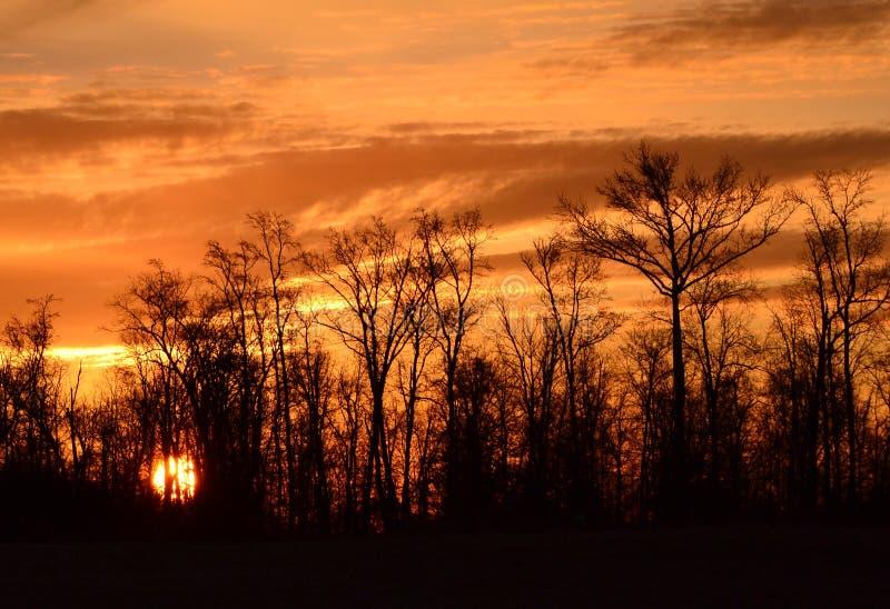 Sun que se levanta a través de los árboles imagen de archivo