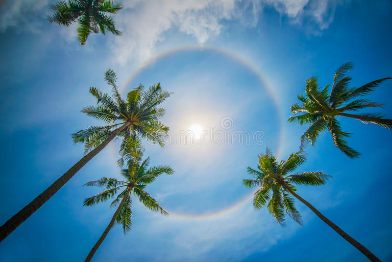 Sun rainbow circular halo phenomenon. With palm trees royalty free stock image