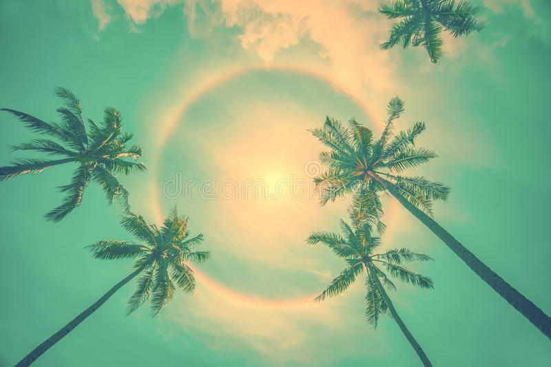 Sun rainbow circular halo phenomenon with palm trees, summer background. Sun rainbow circular halo phenomenon with palm trees, vintage summer background royalty free stock photography