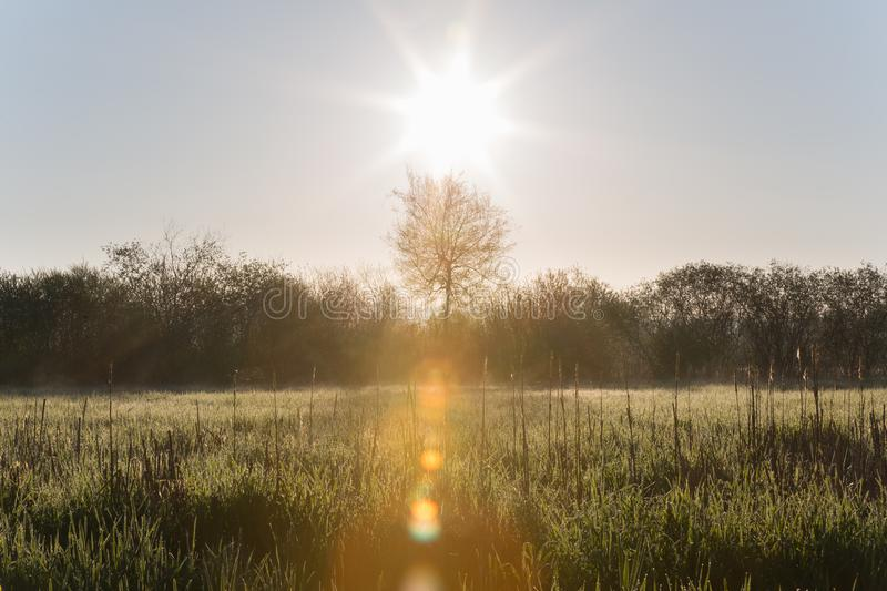 Sun Raising Over High Grasses with Morning Dew and Trees in Spring stock photos