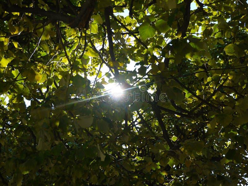 Sun Ray lizenzfreie stockfotografie