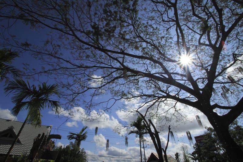 The sun ray royalty free stock photo